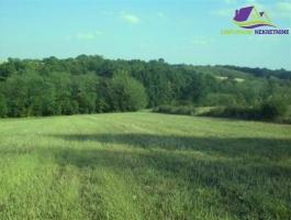 Njiva i šuma površine 16883 m2!!! ID:365/IP